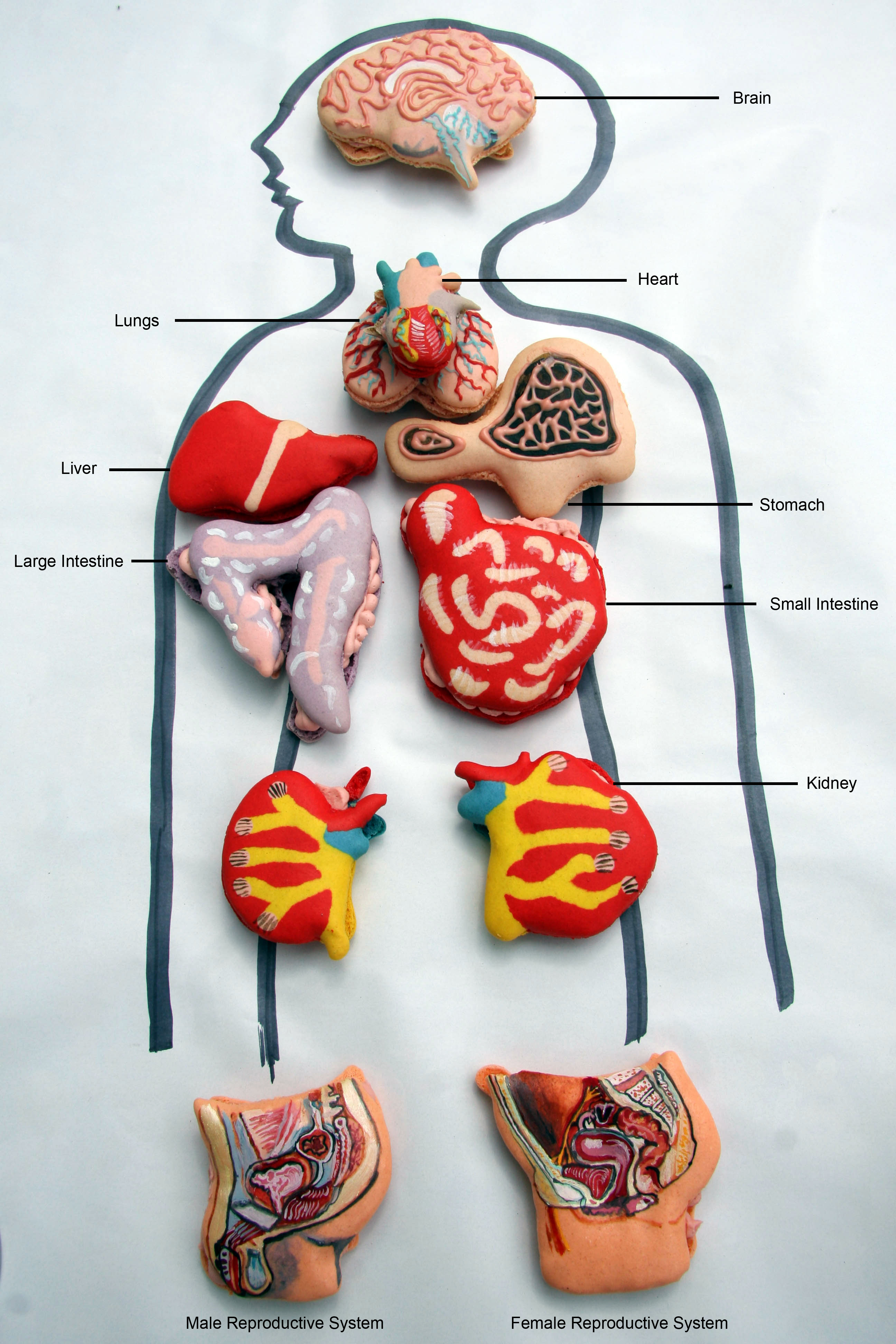 Anatomical Macarons  U2013 Must See   U2013 Eat Your Heart Out