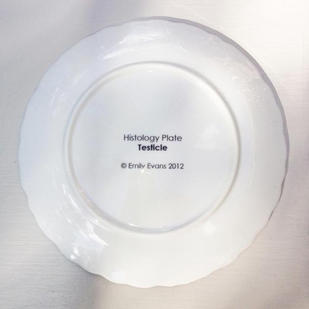 Emily-Evans_Histology-Plate-Back1